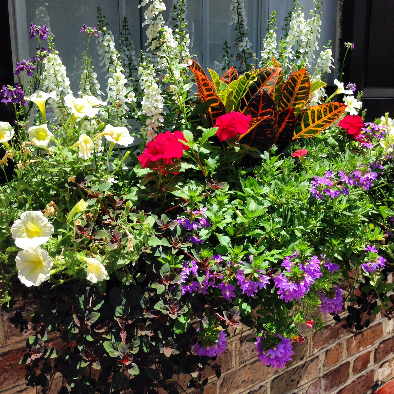 WOWZA Window Boxes Hit the Streets