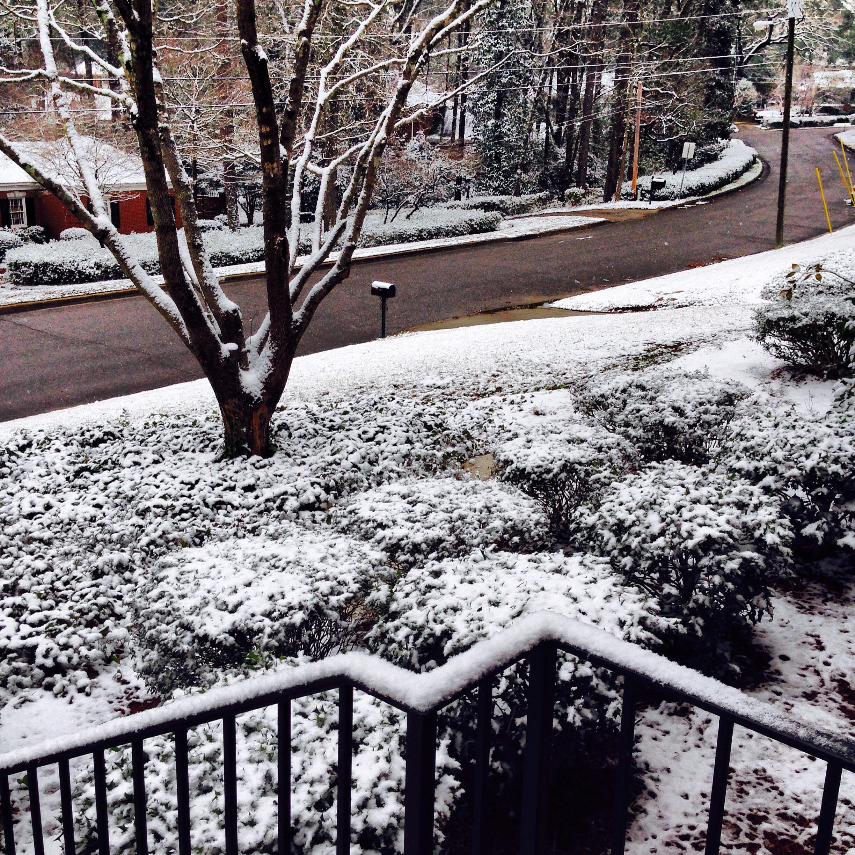 Southern Winter Garden Snow Day
